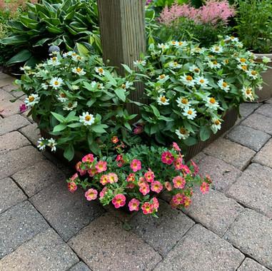 Zinnia Planters