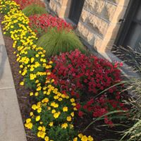 Safari Marigolds and Red Petunias