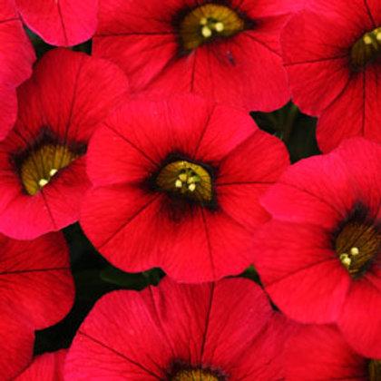 Calibrachoa - Calitastic Red Lips