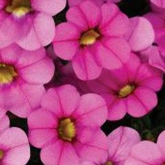Calibrachoa - Calitastic Ballerina Pink