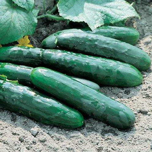 Cucumber Market More