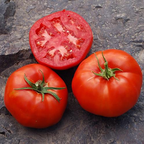 Tomato - Rutgers