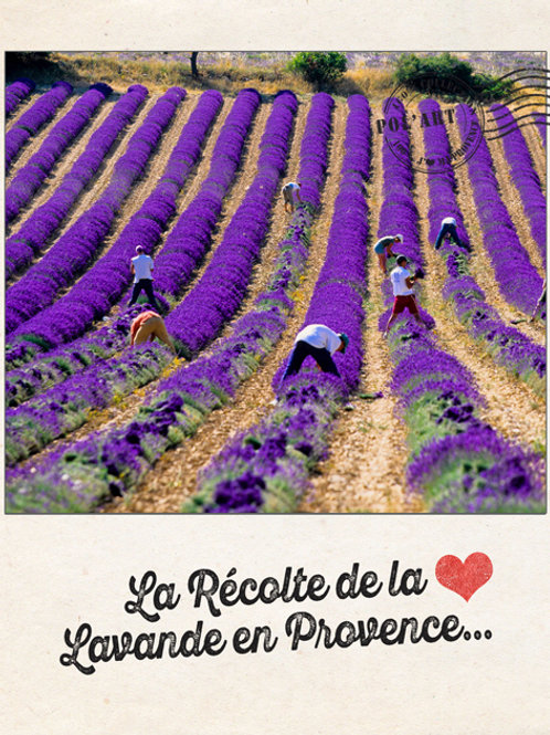 "12 Cartes Postales Collection ""J'aime la Provence"""