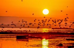 Camargue - Coucher de Soleil (9)