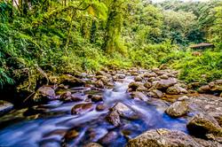 Martinique - Rivière de l'Alma (1)