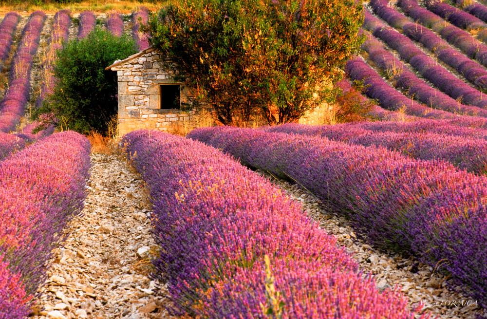 Les Cabanons de Provence