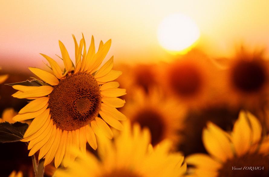 Du soleil en Provence