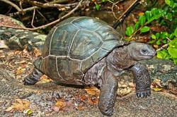 SeychellesBaie Sainte Anne1903200823