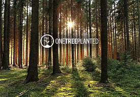 one tree planted image.jpg