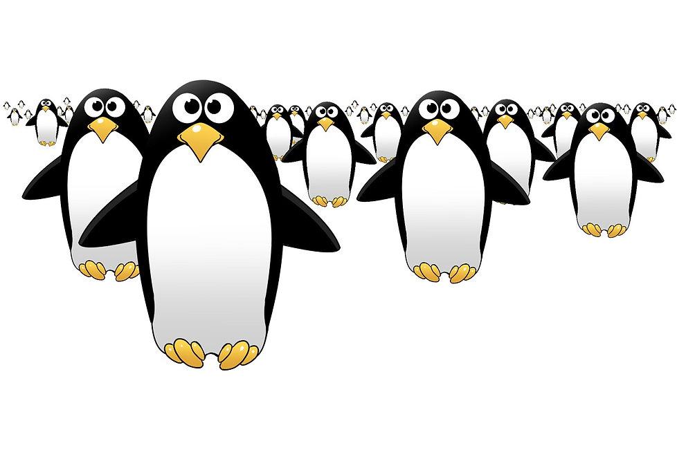 group of penguins.jpg