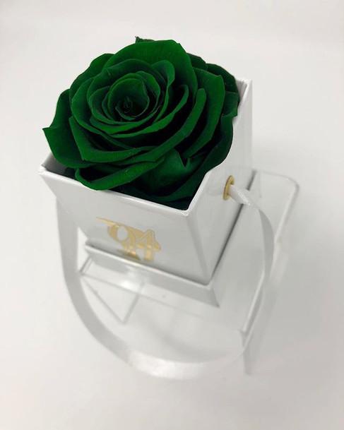 Mini - REAL ROSE THAT LAST 1 YEAR + 🌹 �