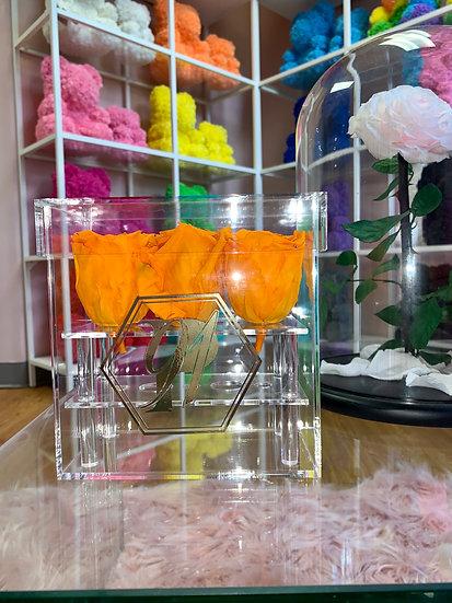 Glass Box XSMALL