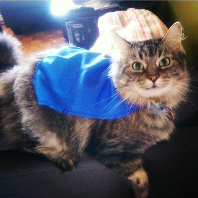 This week's feature feline of the week i