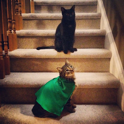 Featured felines of the Week_ Arya and G