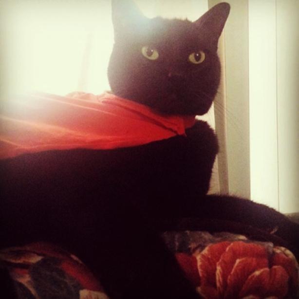 This week's black cat featured feline is