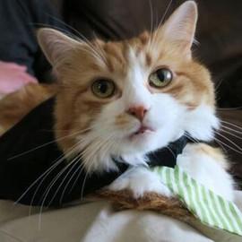 This week's featured feline is Greg brou