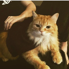 This week's featured feline is _cassiebm
