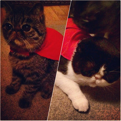 Our feature felines of the week___Oreo a