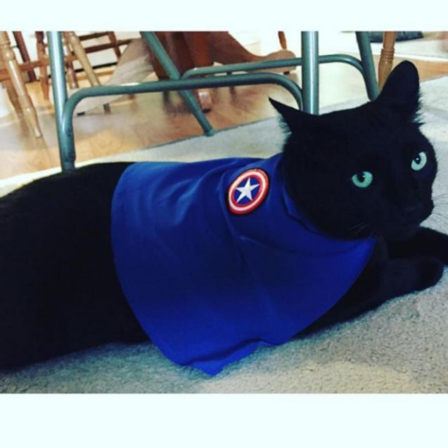 This week's featured feline is another b