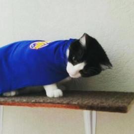 The featured feline this week is _shlyn2