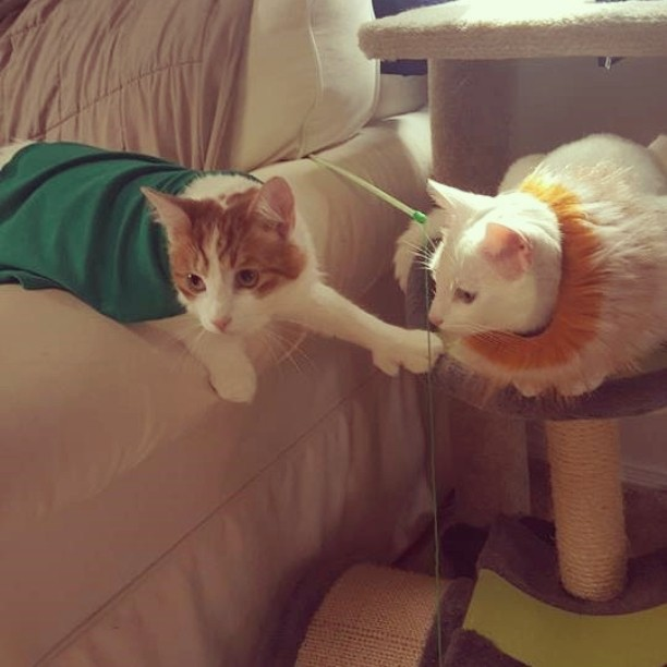 Feature felines of the week are Katie's