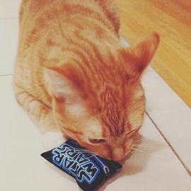 This week's featured feline is _eliz.jpg