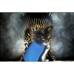 You've met a Jon Snow cat, now get ready