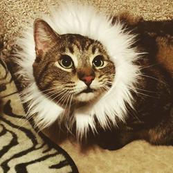 This week's featured feline _poiriergirl