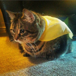 Featured Cat of the week_ Noodle!__This