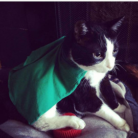 This week's featured feline is one we've
