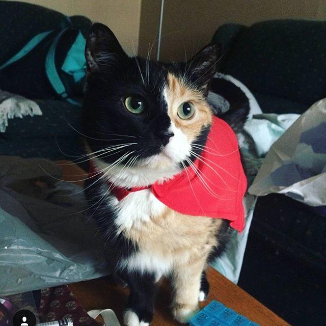 This week's featured feline is _samstasp