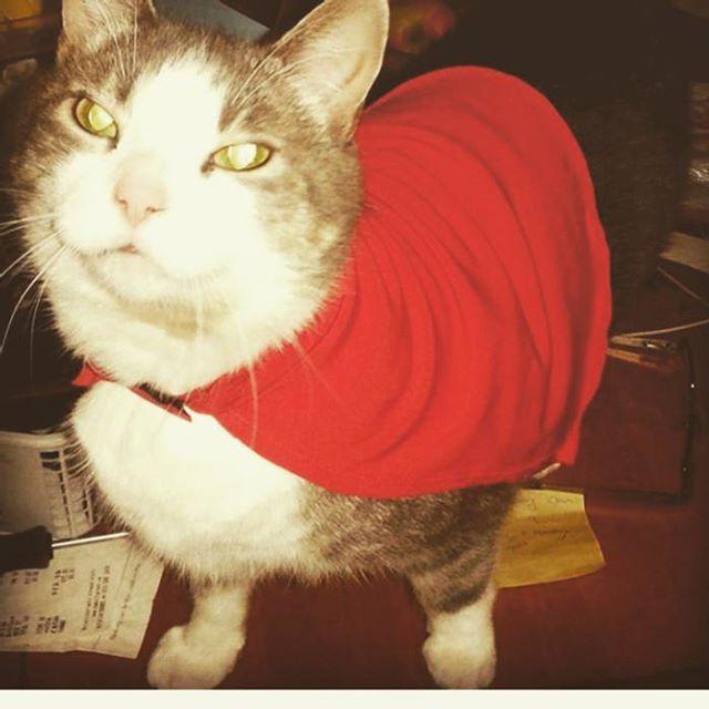 This week's featured feline is _hilljami