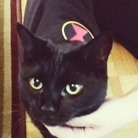 This week's featured feline is Roma brou