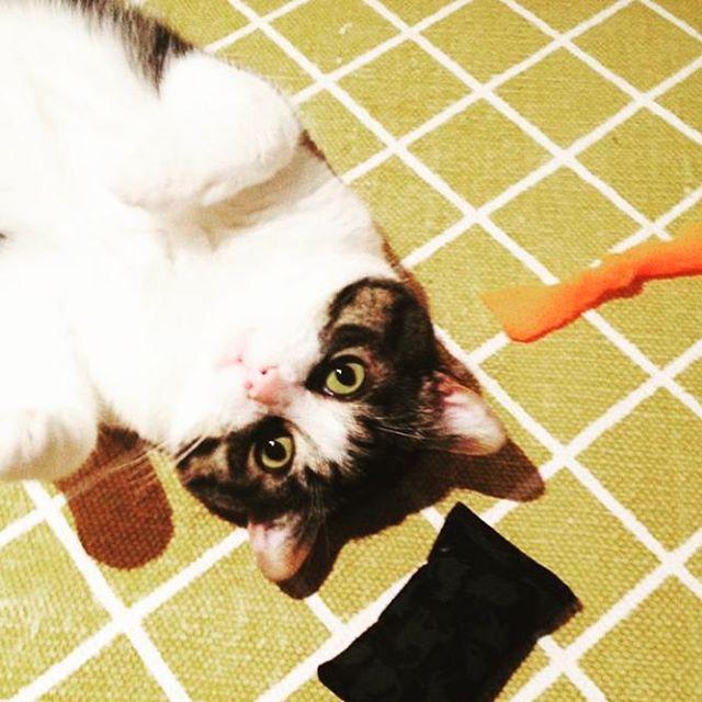 This week's featured feline is a fan fav