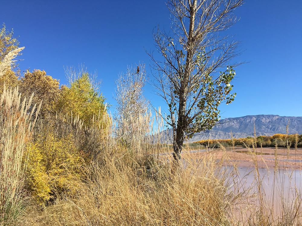 Along the Rio Grande, New Mexico
