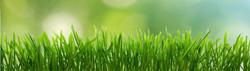 Lawn-Care-1026x292.jpg