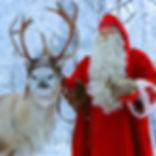 reindeer-801x800.jpg
