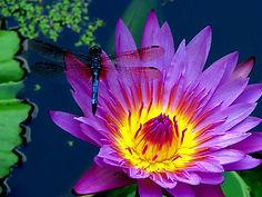 Dragonfly2.jpg