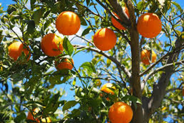 Sweet Orange 15ml