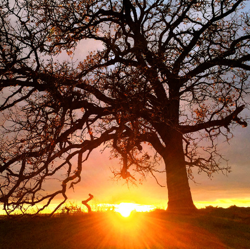 October 24_2015 Sunset That Tree.jpg
