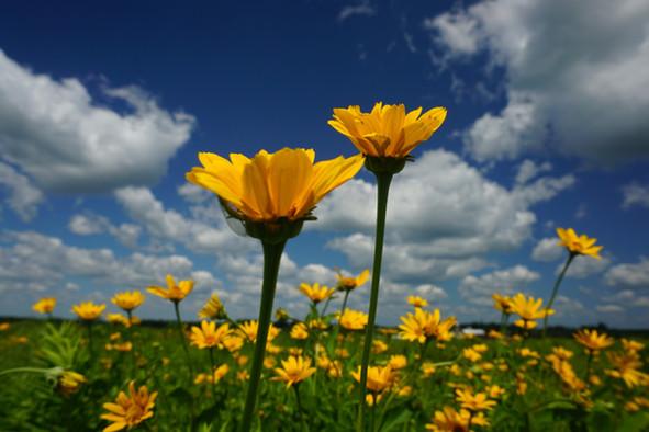 yellowprairie (1).JPG