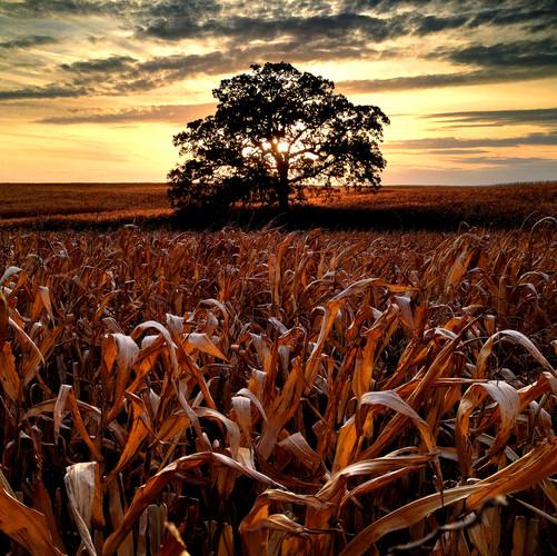 October 9 Day 200 That Tree.jpg