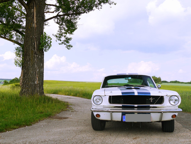 Ford Mustang GT 350 | 3
