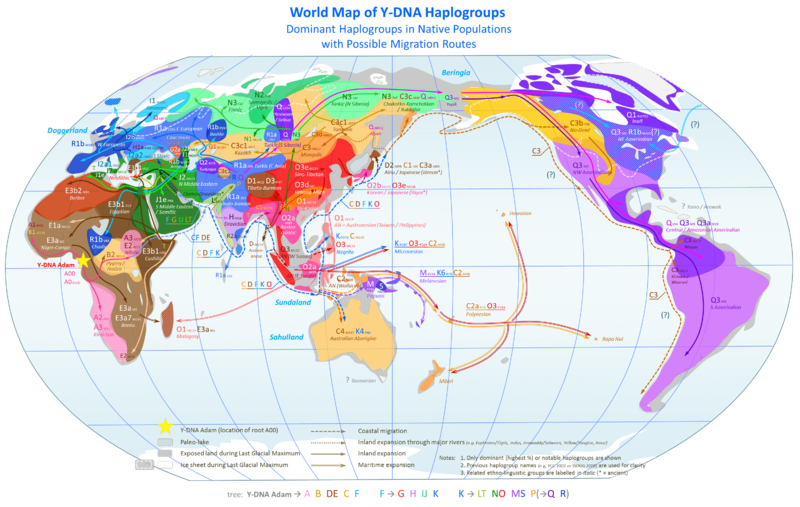 This map shows Y-Chromosome haplogroups around the world. This is one way to tell where your ancestors came from using your genes!
