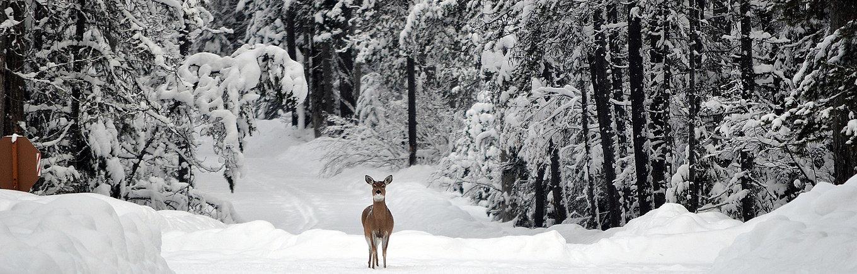 deer-1605673_1920.jpg