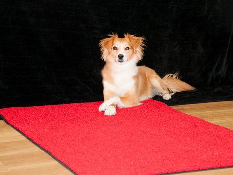 Warum ist der rote Teppich rot?