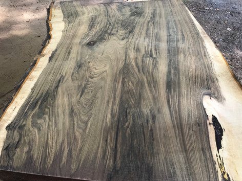 Large Black Walnut Crotch