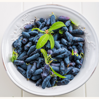 Honeyberry or Haskap - another healthy, local and seasonal berry for Scottish consumers to enjoy