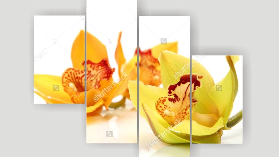 Модульная картина «Орхидея Лайм»
