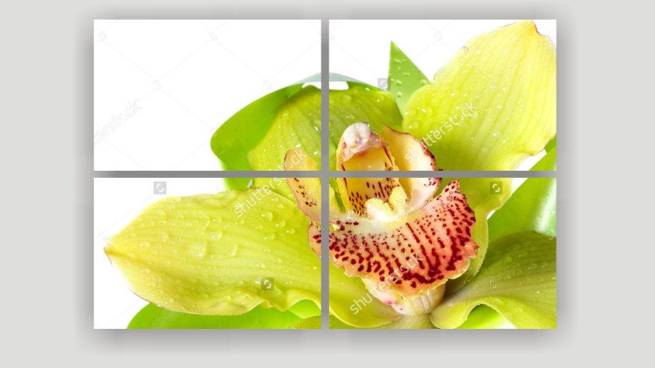 Модульная картина «Зелёная Орхидея»